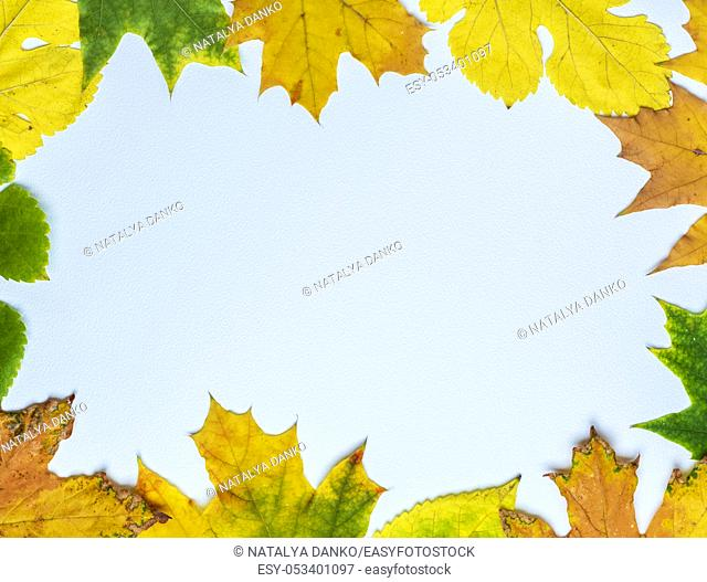 yellow and green leaves of maple and mulberry on a white background, empty space in the middle