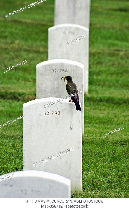 Bird with worm on grave