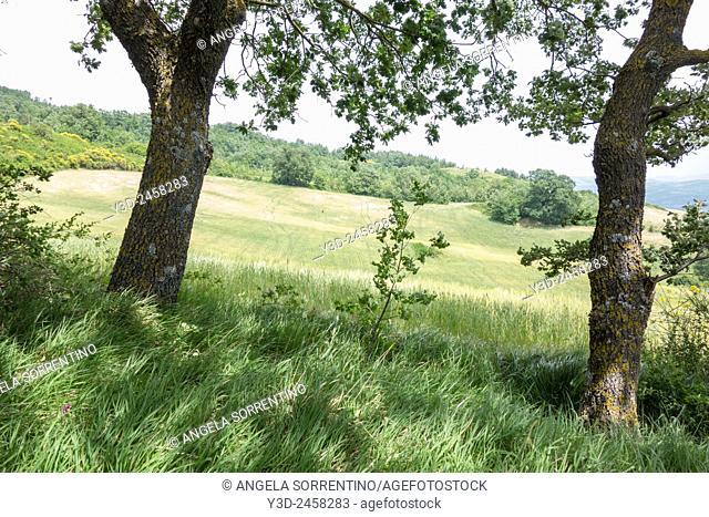 Cultivated field in San Giuliano del Sannio, Molise region, Italy