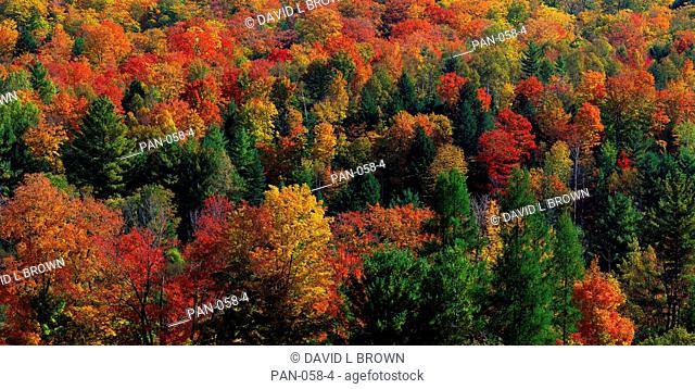 Autumn Leaves, Vermont, USA