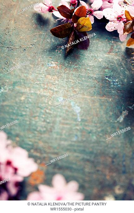 Spring blossom on rustic wooden table