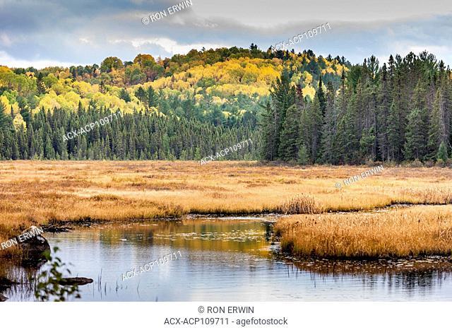 Costello Creek in Autumn, Algonquin Provincial Park, Ontario
