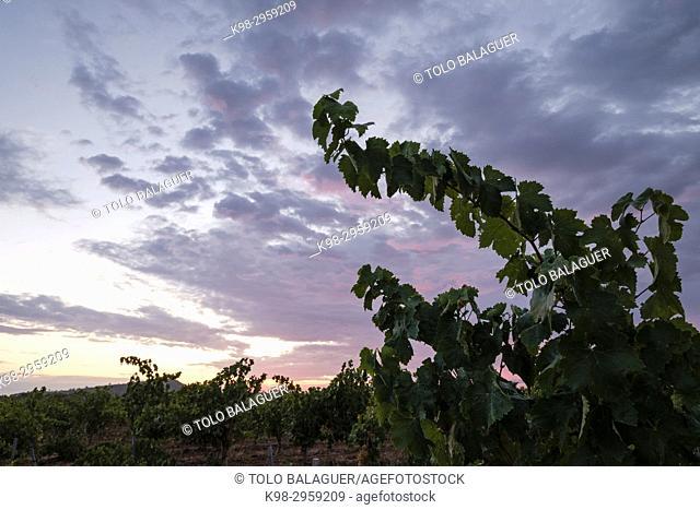 Sunrise over finca (estate) des Cami de Felanitx, Celler Mesquida-Mora, Porreres, Mallorca, Balearic islands, Spain