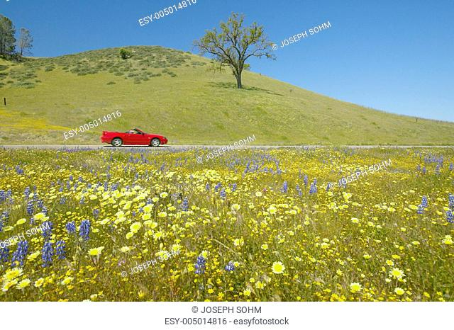 Red convertible driving past colorful bouquet of spring flowers blossoming off Route 58 on Shell Creek road, West of Bakersfield in CA