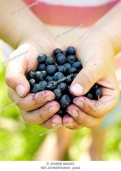 Blueberries in a girl‰Ûªs hand, Sweden