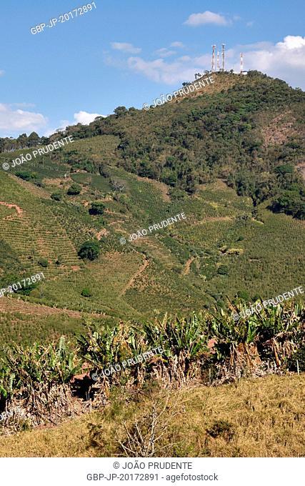 Plantation of bananas and the coffee plantation in Pinheirinho neighborhood is part of the Path of Faith connecting the cities of Águas da Prata to Aparecida