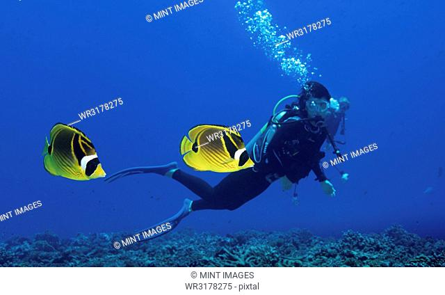 A scuba diver watching a pair of Raccoon butterflyfish in French Polynesia