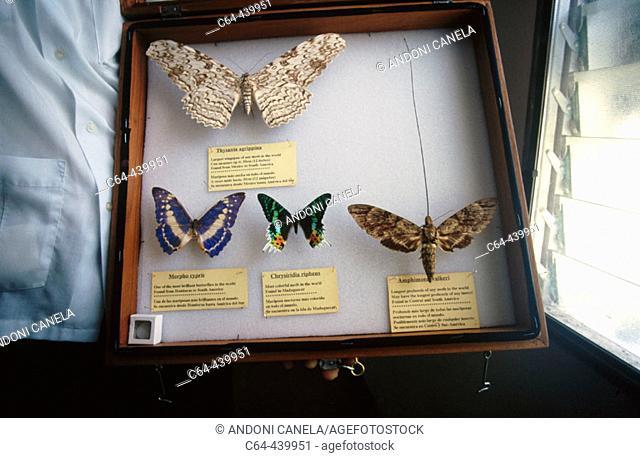 Tropical butterfly collection. La Ceiba. Honduras