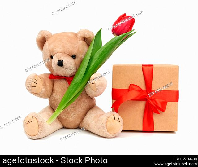cute brown teddy bear holds in his paw a bouquet of red tulips next to a wrapped gift, festive birthday backdrop, Valentine's day