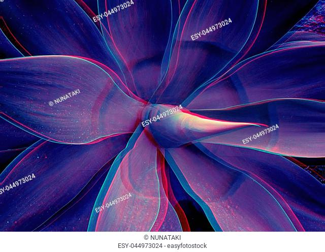 Abstract close up of Agave plant with glitched out effect floral ultraviolet pattern, neon light digital signal