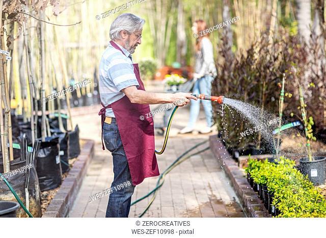 Elderly gardener watering plants in garden centre