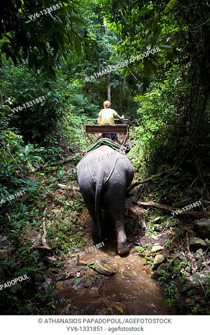ASIA THAILAND KOH CHANG Frame of tall green trees and plantation with an elephant's back side and a rider sitting on its back while they are being lighted from...