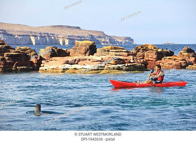 a tourist rows in a boat in los islotes national marine park off espiritu santo island, la paz baja california sur mexico