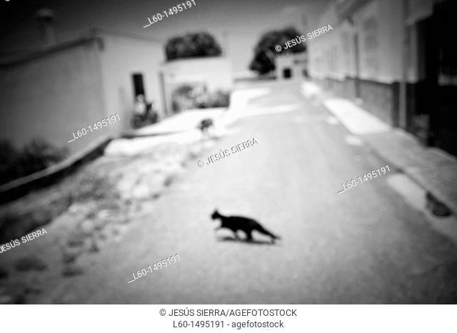 Cat, Los Albaricoques, Cabo de Gata, Almeria Province, Andalusia , Spain