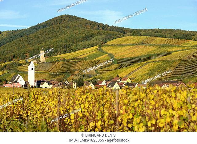 France, Haut Rhin, Alsace Wine Route, Katzenthal, Saint Nicolas church, Wineck castle, vineyard