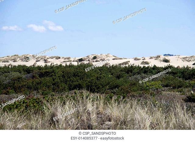 Sand Dunes. Photo taken at Oregon Dunes National Recreation Area on Highway 101