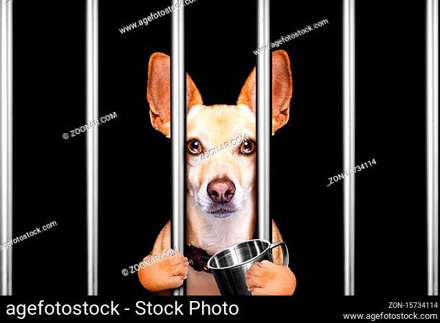 criminal dog behind bars in police station, jail prison, or shelter for bad behavior