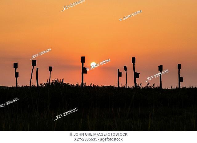 Birdhouses placed in a salt marsh, Sandwich, Cape Cod, MA, Massachusetts