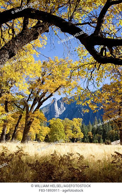 Yosemite Valley, Yosemite National Park, California, USA, El Capitan Meadow, Sentinel Rock in distance, black oaks Quercus kelloggi, November