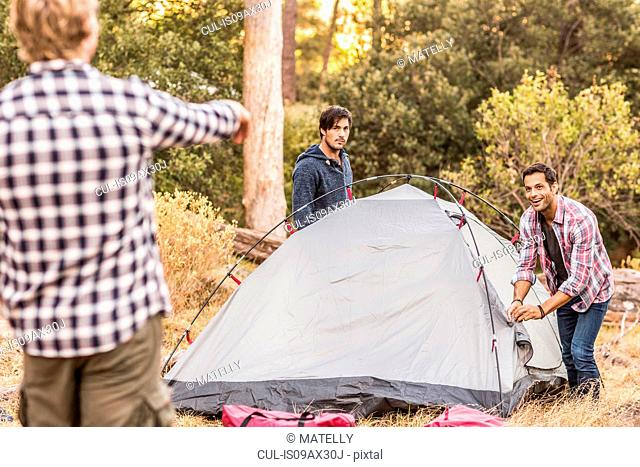 Three men putting up tent together in forest, Deer Park, Cape Town, South Africa