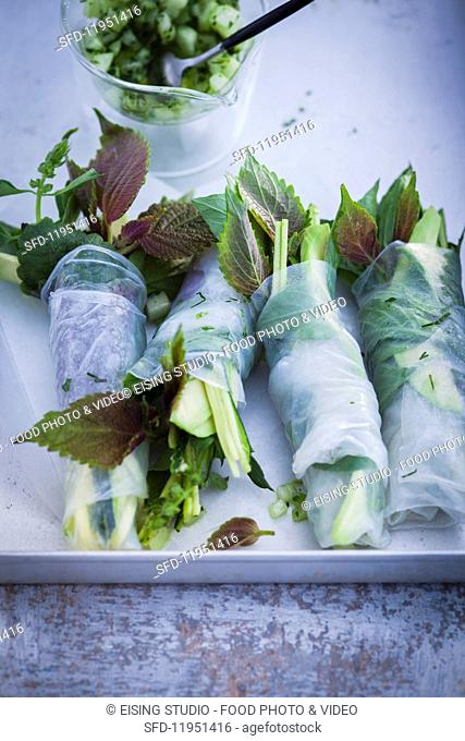 Vegetable spring rolls with avocado and herbs (Asia)