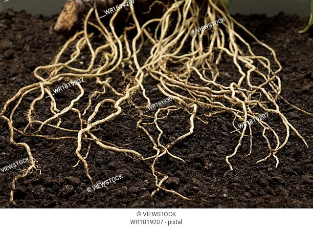 The roots of plants