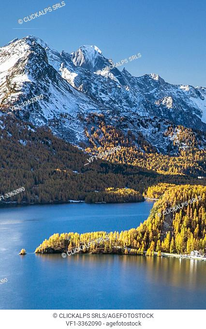 Yellow larches reflecting in Lake Sils by the Pizzo Badile, Engadine, Switzerland