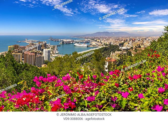 Panoramic view. Bougainvillea flowers, port and landscape. Malaga city. Costa del Sol, Andalusia. Southern Spain Europe