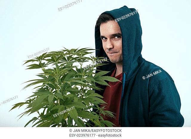 Young man in hoodie and cannabis plant