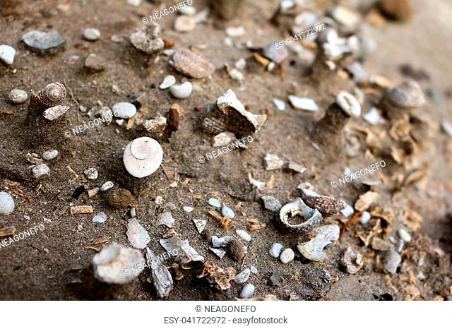 Ancient shells in the soil and sand in Thailand