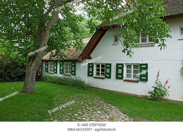 Walnut tree in the garden of an old thatched house in the Bernhard-Seitz-Weg in Ahrenshoop-Althagen on the peninsula Fischland