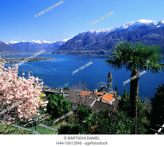10612896, Ronco, village, palm, look, glance, on Ascona, view, Lago Maggiore, lake, sea, Switzerland, Europe, canton Ticino