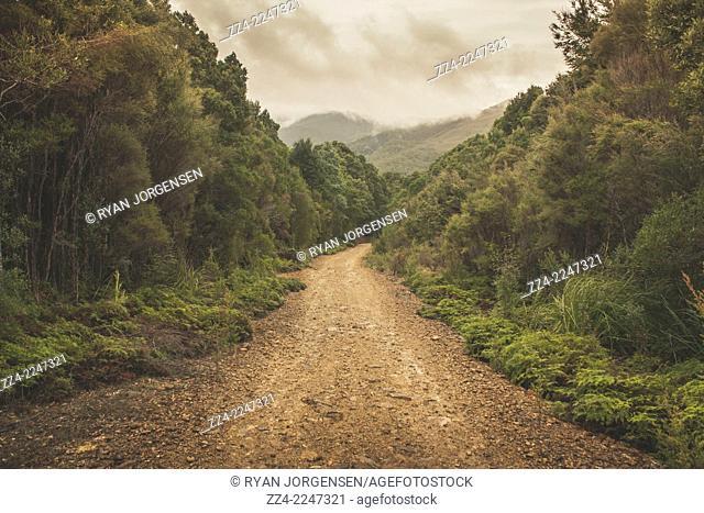 Horizontal fine art landscape of a beautiful yet gritty dirt road running through an unspoiled green forest woodland. Photograph taken West Coast Range