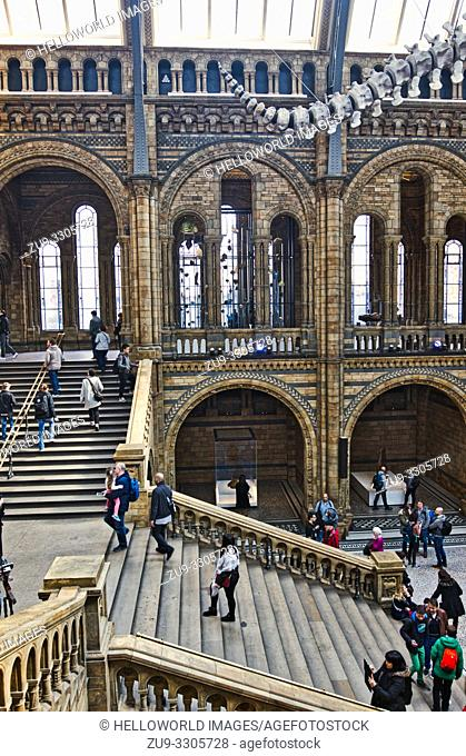 Hintze Hall with part of blue whale skeleton, Natural History Museum, Kensington, London, England