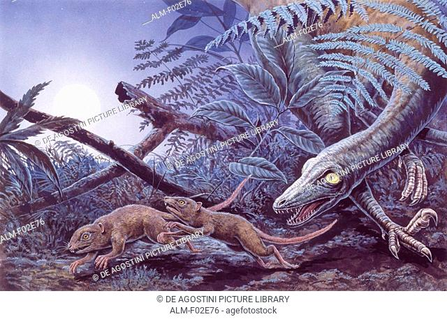 Palaeozoology - Cretaceous period - Dinosaurs - Troodon - Art work