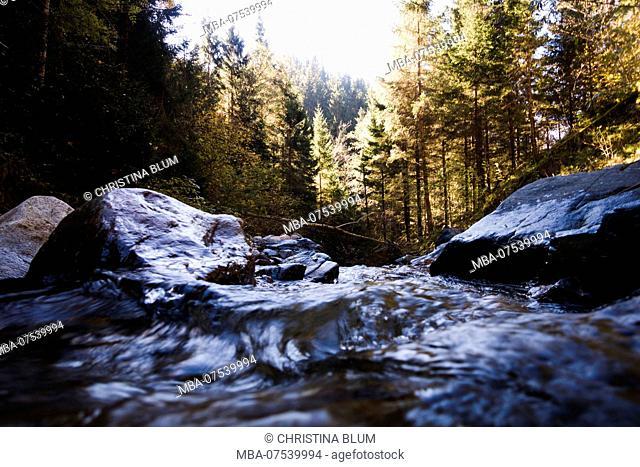 Autumn mood, forest, Obermillstatt, Lake Millstatt, Carinthia, Austria