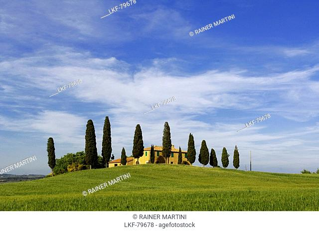 Farm with cypress trees near Pienza, Crete Senesi, Tuscany, Italy