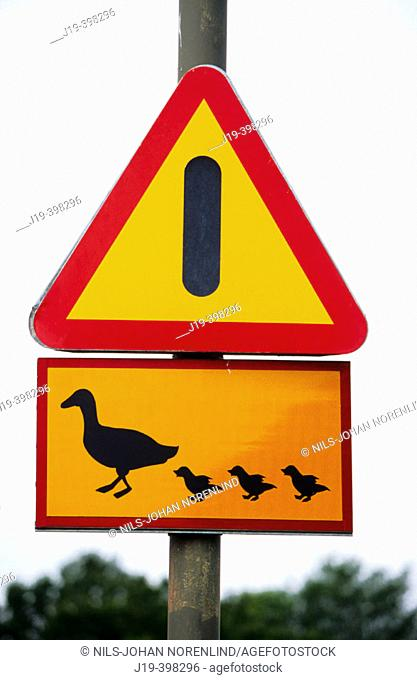 Road sign. 'Warning for ducks and duckies'. Sweden