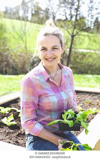 Young, pretty blond woman is planting vegetables in the garden in the raised bed