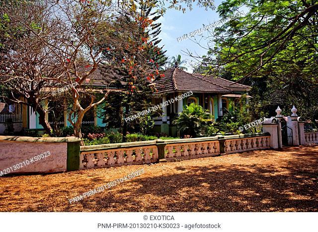 Trees around the Salvador Da Costa Mansion, Loutolim, Salcetta, South Goa, Goa, India