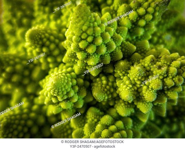 Broccoli flower Romanesco broccoli (actually a cauliflower. cultivar)