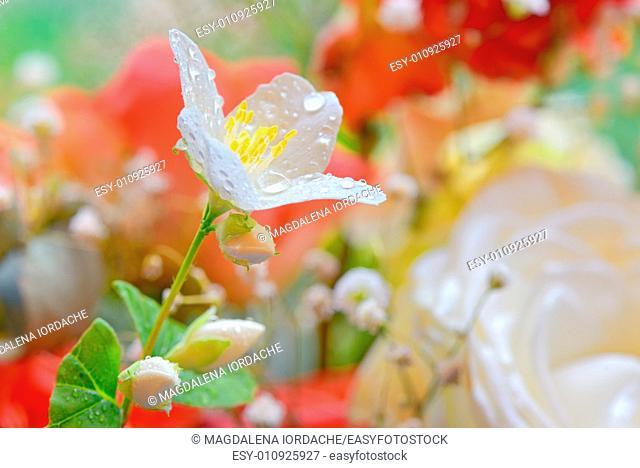 jasmine flowers in spring time