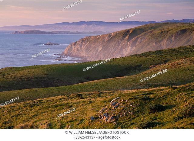 Point Reyes National Seashore, Marin County, California, USA, west side of Tomales Point, Bodega Head in distance, hikers on trail, elk in fields