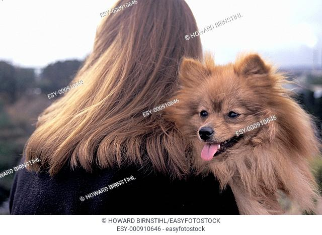 Very hairy composition of the back of a girl's windswept hair and long haired pekinese dog looking over her shoulder