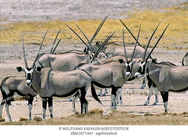 NAMIBIA, ETOSHA NATIONAL PARK, ORYX