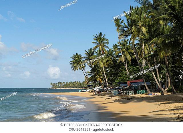 palm fringed beach in Las Terrenas, Samana peninsula, Dominican Republic, Carribean, America
