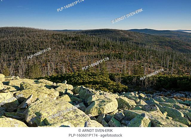 View from Mount Lusen over woodland with dead trees in the Bavarian Forest National Park, Bavaria, Germany
