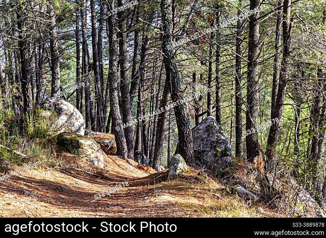 Road to the pinewood in Iruelas Valley. Sierra de Gredos. Avila. Spain. Europe