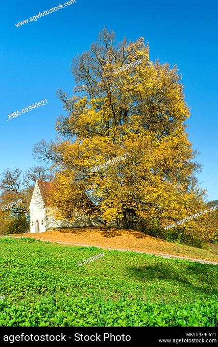 Germany, Baden-Württemberg, Rangendingen, summer linden with autumn leaves at the Wendelinskapelle