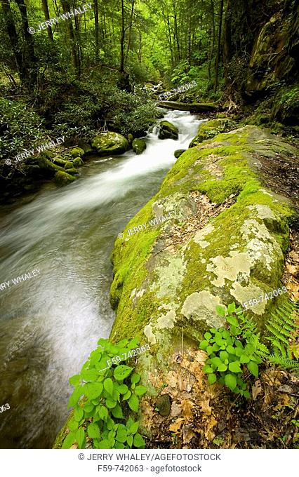 Roaring Fork, Motor Nature Trail, Great Smoky Mountains National Park, TN, USA